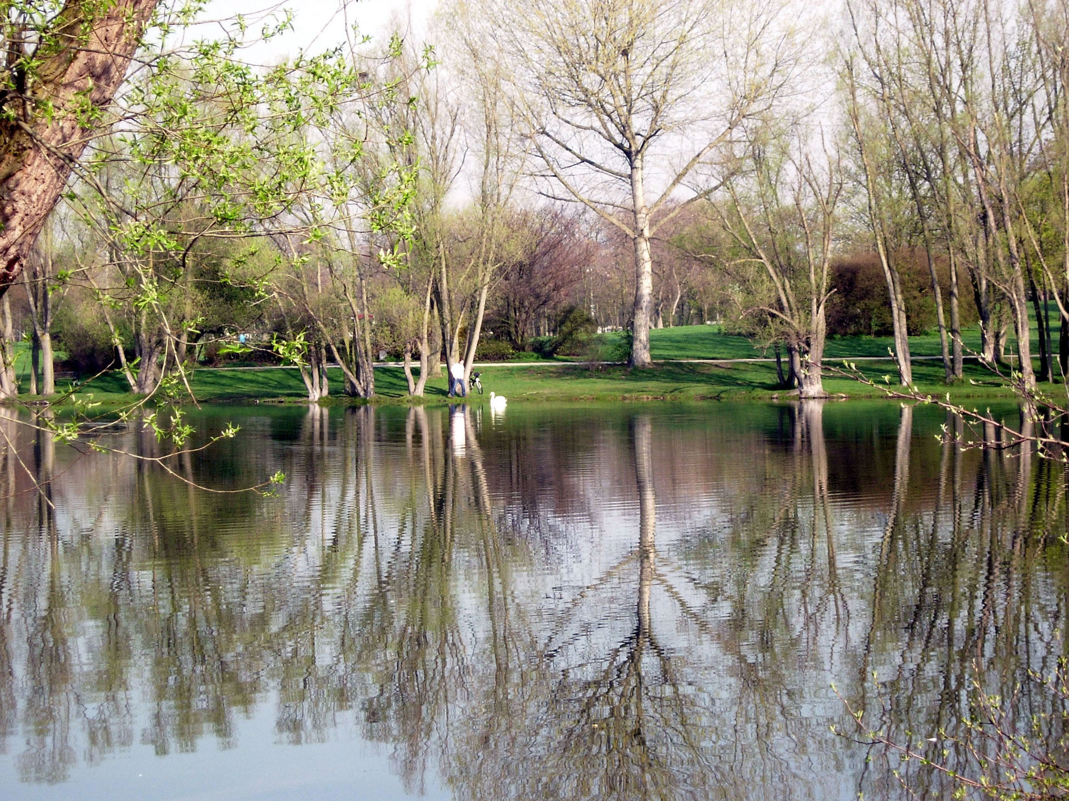 Rebstockweiher im Frühling